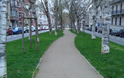 Moins de vert sur l'Avenue Van Overbeke ?